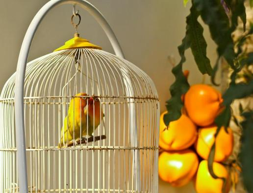 Soñar con Pájaros 3