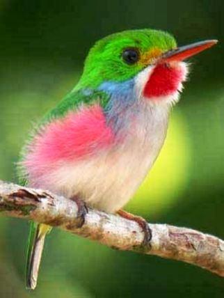 Soñar con Pájaros 6