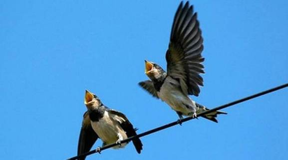 Soñar con Pájaros 8