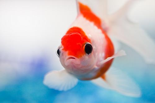 Soñar con peces 1