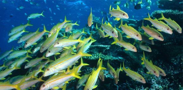Soñar con peces 5